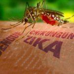 El Virus del ZIKA y la Homeopatía